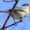 Feds Offering $28K to Count Birds in Santa Monica Mountains