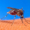 First Human West Nile Death of 2014 Reported in L.A. County