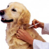 May 4: Low-Cost Pet Shots, Microchips at Valencia Park