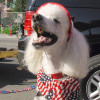 How to Keep Your Pets Safe This Fourth of July