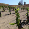 COC Viticulture Students Cultivating Success
