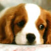 Animal Control Releases Statement on Canine Influenza