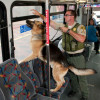 EOW: Deputy Says Goodbye to Transit Division Bomb Dog