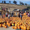 Lombardi Ranch to Remain Open But Halt Production