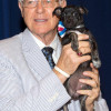 Antonovich Pet of the Week (6-30-2015): Shelsie