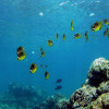 Coming, Going: Coral Reefs   Commentary by Dianne Erskine-Hellrigel