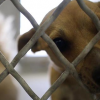 July 23: Castaic Animal Shelter Cutting Adoption Fees for 'Clear the Shelters Day'