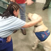 County Jail System Goes to the (Therapy) Dogs
