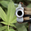 Pot Heads Still Can't Own Guns, Court Says