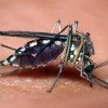 June 25-July 1: Mosquito Control Awareness Week