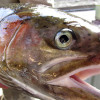 The Time is Now to Buy Your Sport Fishing License