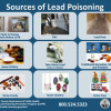 Public Should Take Precautions Against Lead Poisoning