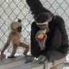May 13: Celebrate Mother's Day at Breakfast with the Gibbons