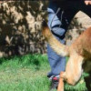 Acton Trainers' Dog Cruelty Case Goes to Trial