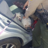 Deputies Break Window, Rescue Dogs Locked in Car