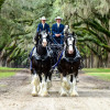 Nov. 16: Express Employment Professionals to Host Clydesdales for Carousel Ranch Benefit