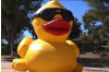 Prize Winners Announced for Rubber Ducky Festival
