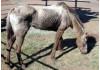 Backyard Butcher Arrested; Dozens of Animals Saved