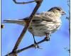 Bird Nests Halt Vasquez Construction; Weekend Event Postponed