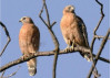 Sept. 21: Morning Bird Hike in Towsley Canyon