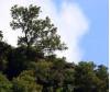 'Changing Seasons' Stroll Saturday Through Santa Clarita Woodlands