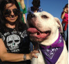 Dogs Help Raise Money, Awareness for Cancer Fight