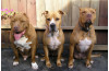 Chase Awards $100k to Pit Bull Rescue that's Leaving Agua Dulce