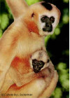 May 12: Breakfast with the Gibbons