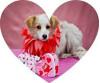 Find Your True Love This Valentine's Weekend