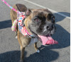 Sweltering 'Dog Days' of Summer Dangerous for Household Pets