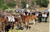100 Mules Arrive in Whitney Canyon, Newhall