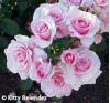Nov. 1-2: Annual Rose Show, Art Exhibit at Hart Park