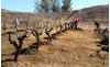 COC Plants New Vineyard at Valencia Campus
