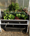 Learn to Grow Vegetables with Fish at KHTS Home, Garden Show