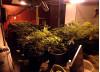 Deputies Bust Up Canyon Country Grow House; Sweep Nets 9