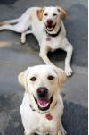 County Announces Pet-Friendly Cooling Centers
