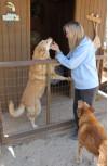 Fundraiser Aims to Help Senior Dog Sanctuary
