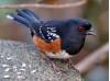 Jan. 17: MRCA Winter Bird Hike at Towsley