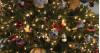 Tree Lighting Ceremonies to Light Up LA County, Sacramento