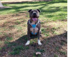 Cesar Millan: Report of Death Exaggerated