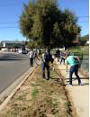Volunteers Help Spruce Up Alaminos Drive