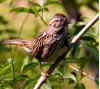 Aug. 15: Morning Bird Hike in Towsley Canyon