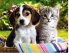 May 16: Free Pet Vaccination Clinic in Newhall