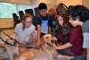 Guide Dogs Relieve Stress of Finals Week at AOC