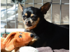 Fundraiser to Benefit Little Dog with Big Personality