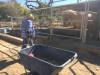 Blue Star Ranch Seeking Volunteers