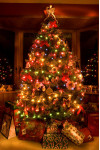 County Provides Christmas Tree Recycling