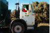 Local Trash Haulers Offer Free Christmas Tree Recycling