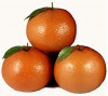 July 29: Help Harvest Oranges at CSUN to Fight Hunger