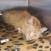 Animal Lovers Rally to Save Homeless Woman's Injured Cat
